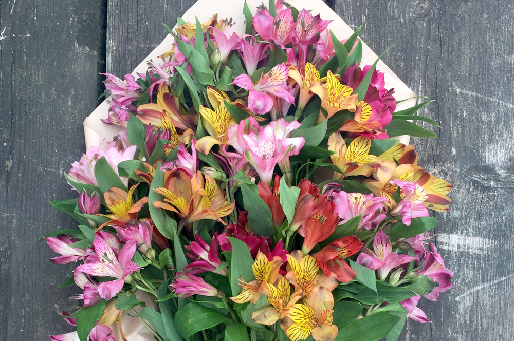 Alstroemeria - fire flower