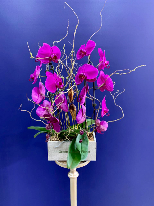 Purple Double Orchid Planter (1990)